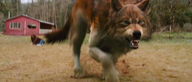 Jacob Black Wolf Gif Jacob Wolf Gif